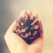 Hand holding pine cone — Stock Photo