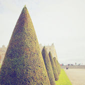 Line of topiary trees for ornamental garden — Stock Photo
