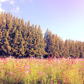 Beautiful trees in flowered field — Stock Photo