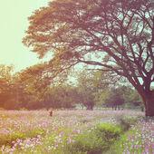 Woman walking in flowered field — Stock Photo