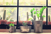 Various of cactuses for decoration — Stock Photo