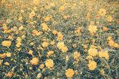 Beautiful blossoming field — Fotografia Stock