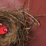 Nest of Love — Stock Photo #64076527