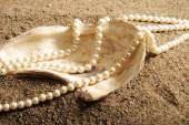 Oyster Shell — Stock Photo