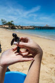 Let Release Baby Sea Turtle — Stock Photo
