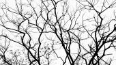 Branches in black on white — Foto de Stock