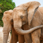 Elephants — Stock Photo #59542313