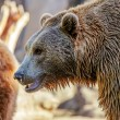 Bear in nature — Stock Photo #65693765
