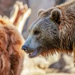 Bear in nature — Stock Photo #66532255