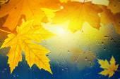 秋の背景 — ストック写真
