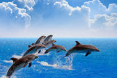 Jumping dolphins — Stock Photo