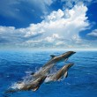 Dolphin jumping — Stock Photo #56433601