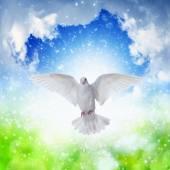 Gökyüzü sinekli beyaz güvercin — Stok fotoğraf