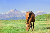 Horse against a volcano — Stock Photo