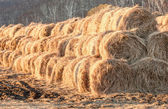 Hay on a farm — Stock Photo