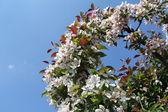 Magic flowers of spring — Stock Photo