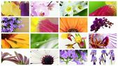 Various colorful flowers collage — Stock Photo