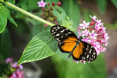 Pretty Butterfly — Stock Photo