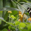 Pretty Butterfly — Stock Photo #54852761