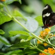 Pretty Butterfly — Stock Photo #54852799