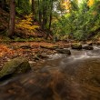 Forest Stream In Autumn — Stock Photo #56438217