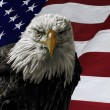 American Bald Eagle on Flag — Stock Photo #62990923