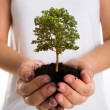 Tree in female hands — Stock Photo #56377613