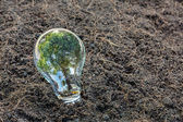 Bulb with plant growing inside — Stock Photo