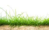 Fresh spring green grass panorama — Stock Photo