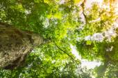 Green Forest trees — Stock Photo