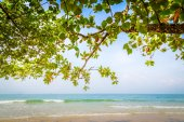 Green leaf and beach — Stock Photo