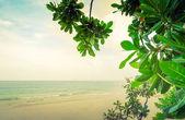 Green leaf and tropical beach — Stock Photo