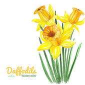 Daffodils — Stock Vector