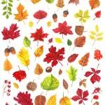 Autumn leaves — Stock Vector #77711124