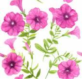 Petunia flowers pattern — Stock Vector