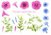 Petunia watercolor set — Stock Vector