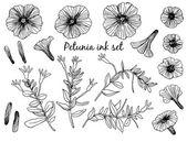 Petunia set — Stock Vector