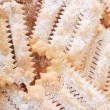 Chiacchiere, italian Carnival pastry background — Stock Photo #67301425