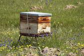 Bee hive — Stock Photo