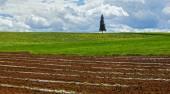 Farmland Planting Crops Fresh — Stock Photo