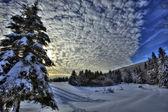 HDR Canada Snow Sky Trees — Stock Photo