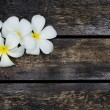 White Plumeria — Stock Photo #52838045