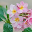 Pink  flowers — Stock Photo #66235499