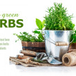 Fresh green herbs with garden tools — Stock Photo #54801933
