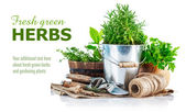 Fresh green herbs with garden tools — Stock Photo