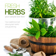 Fresh green herbs with garden tools — Stock Photo #54814613