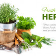 Fresh green herbs with garden tools — Stock Photo #61915065
