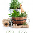 Fresh green herbs with garden tools — Stock Photo #61917353
