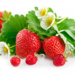 Fresh strawberry with green leaf and flower — Stock Photo #61923359