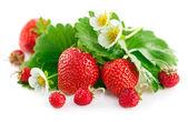 świeże truskawki z zielonych liści i kwiatów — Zdjęcie stockowe